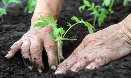Agricultura familiar, um estímulo à economia brasileira