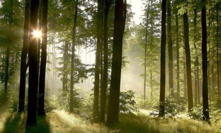 É possível recuperar 12 milhões de hectares de floresta até 2030?