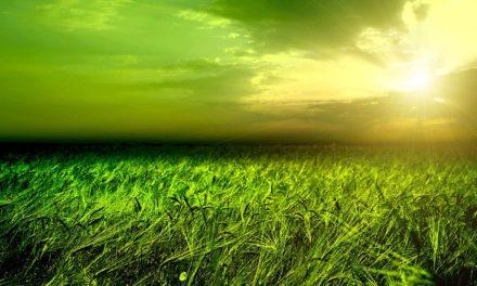 Retrato ambiental