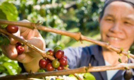 O importante papel das mulheres no desenvolvimento rural
