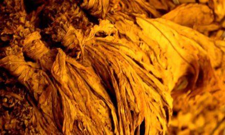 Brasil exportou mais de US$ 2 bilhões em tabaco no último ano