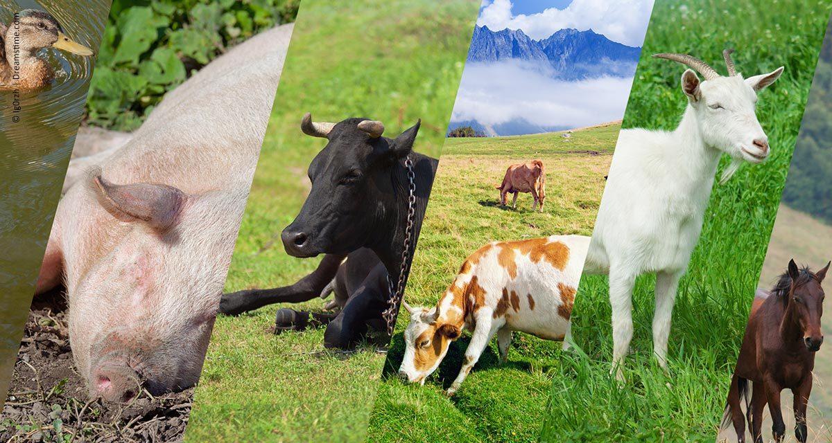 Instituto Certified Humane Brasil: bem-estar animal eleva a receita na produção