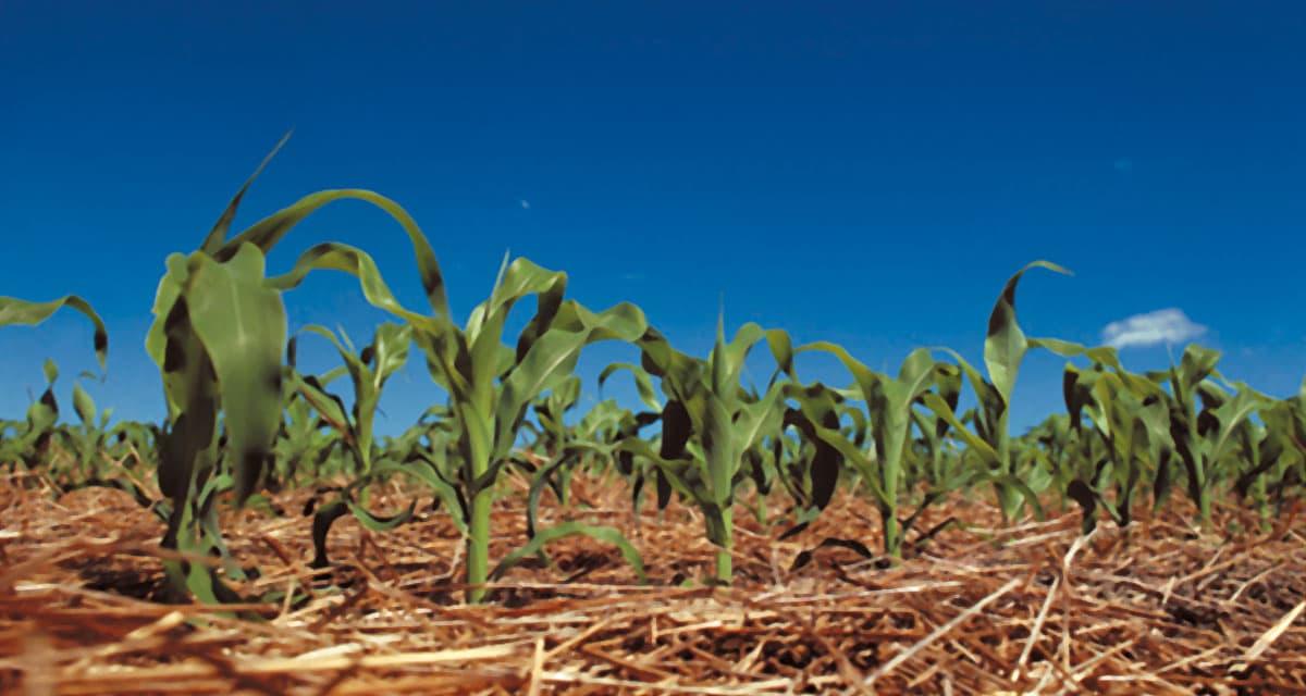 Agricultura sem parar