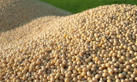 Colheita de soja deverá bater recorde no Brasil na safra 2016/2017