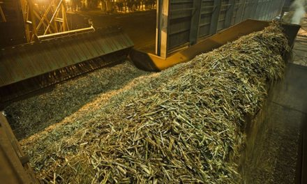Biosev fecha safra 16/17 com moagem de 31,5 milhões de toneladas