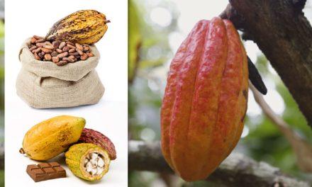 Chocolate do Equador atrai empresas brasileiras