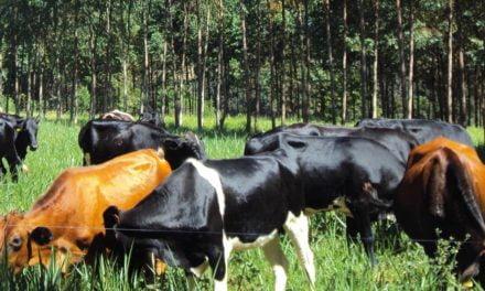 Integração Lavoura-Pecuária-Floresta já atingiu a marca de 11,5 milhões de hectares do agronegócio brasileiro