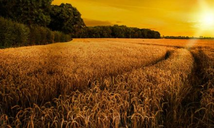 Bloomberg lança serviços de notícias, dados e tecnologia para agronegócio