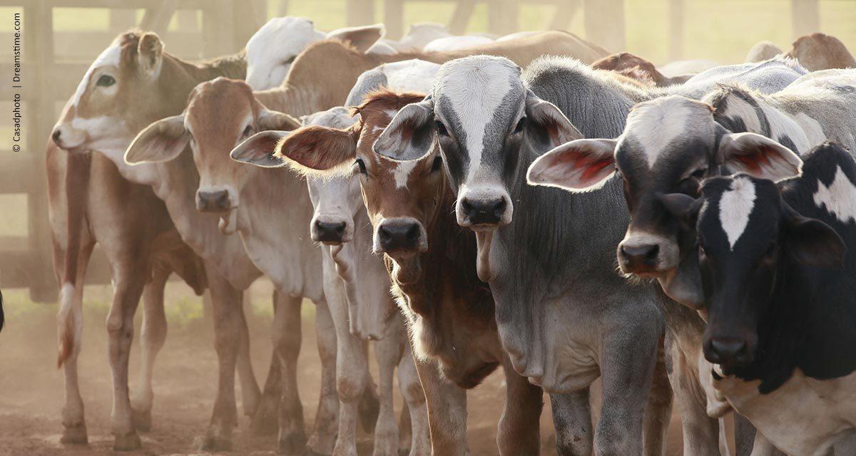 Mato Grosso do Sul registra o melhor resultado nas exportações de carne bovina desde 2014