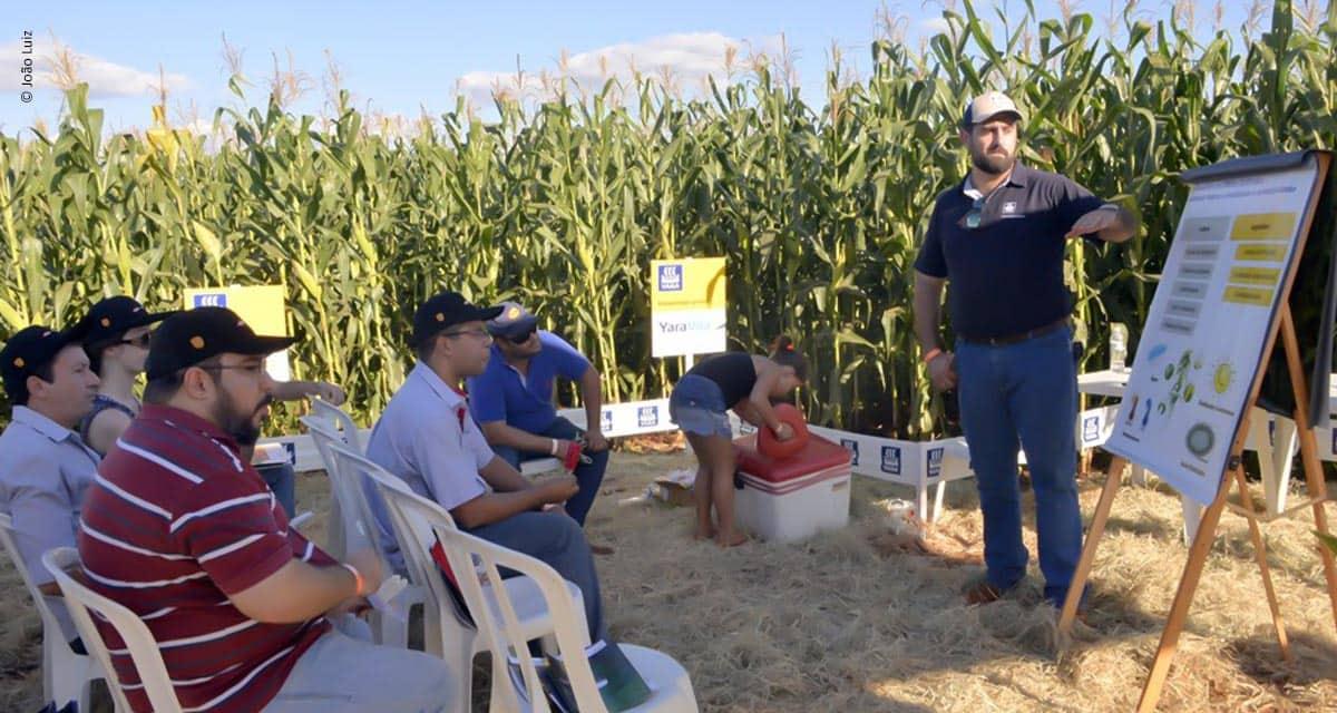 Encontro de milho safrinha em Guaíra atualiza técnicos e produtores sobre tecnologia e aumento de produtividade
