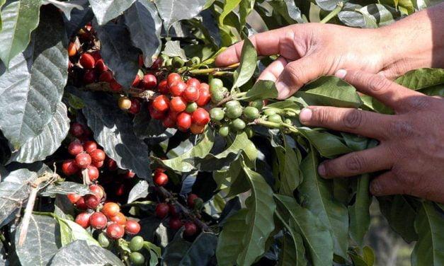 Programa unifica agenda de ações pela sustentabilidade na cafeicultura brasileira
