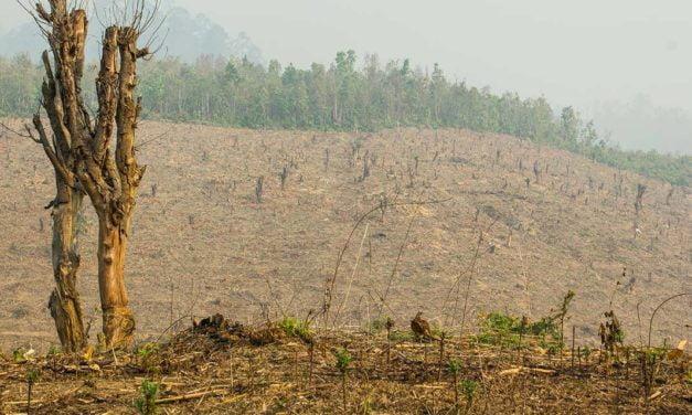 Municípios do Oeste da Bahia recebem ferramenta que ajuda a planejar o crescimento econômico e reduzir o desmatamento
