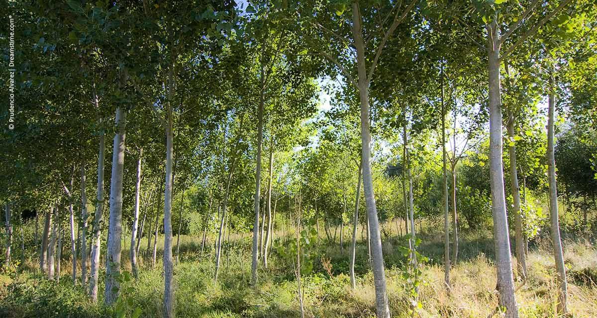 Florestas plantadas são cada vez mais necessárias para estimular a economia