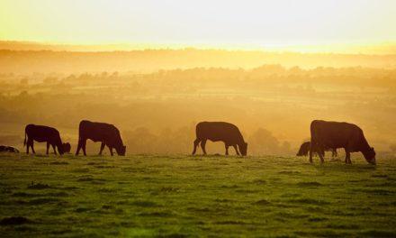 MAPA e CNPC traçam linhas gerais de um plano estratégico para a pecuária brasileira