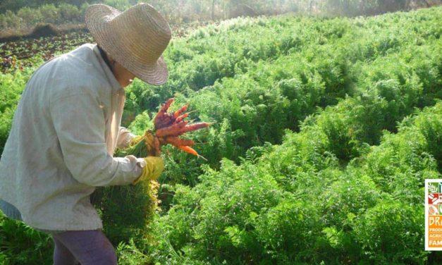 SEAD leva agricultores para maior feira de orgânicos da América Latina
