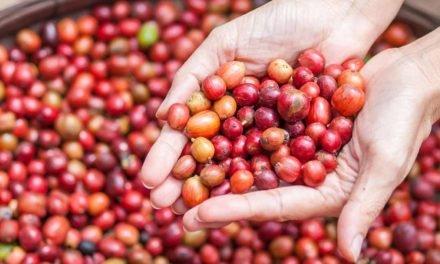 Um salto de qualidade para a cafeicultura brasileira