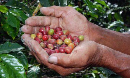 Plataforma Global reúne esforços na busca por café sustentável e próspero