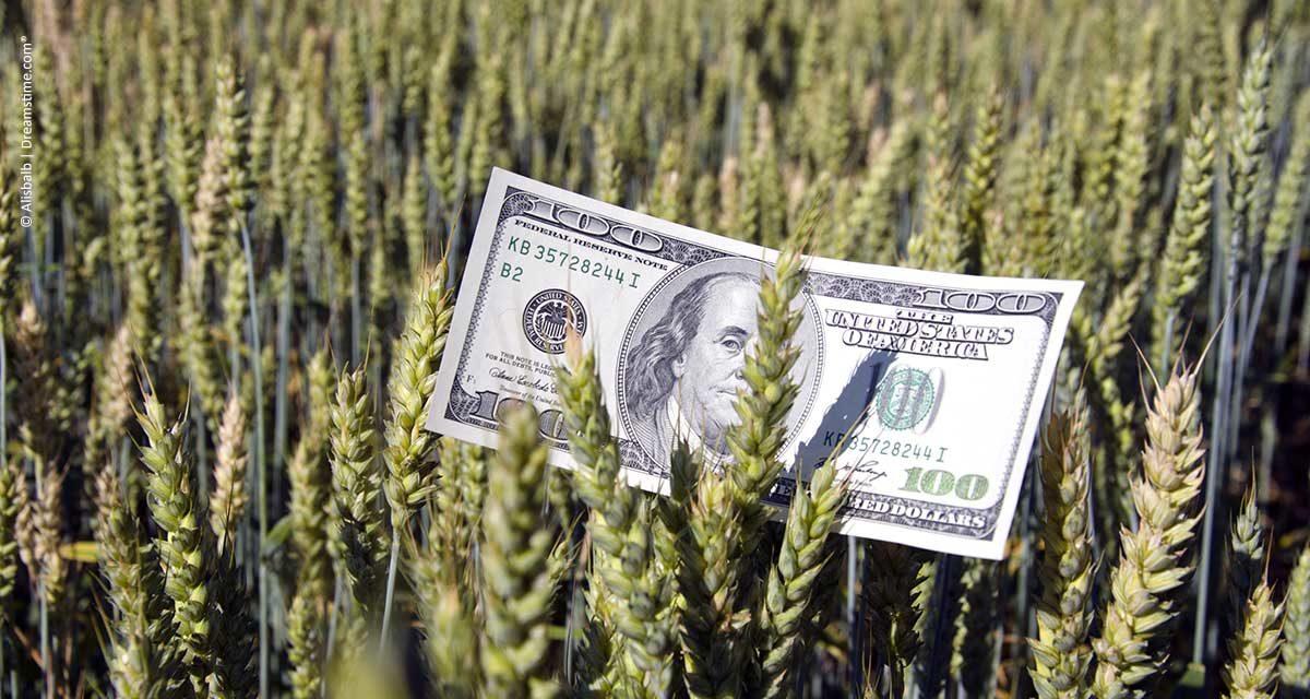 CII expandirá o acesso a financiamento para PMEs participantes da cadeia de valor do agronegócio no Brasil