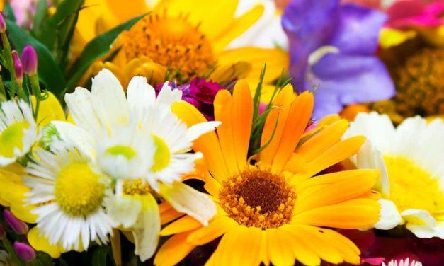 Lançada a primeira faculdade de flores no Brasil