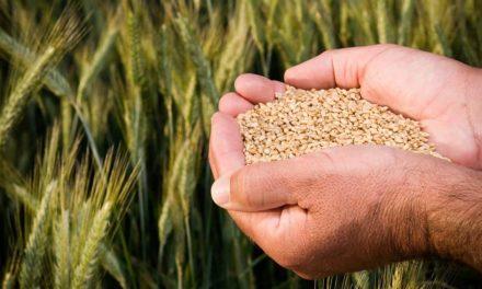 Inovação e Sustentabilidade para a cadeia produtiva de grãos do país