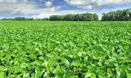 Instituições do Agro lançam Guia do Programa de Regularização Ambiental no MS