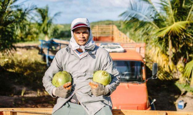 No Dia do Agricultor, Obrigado revela como funciona seu sistema de aristas
