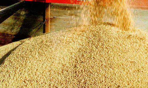 Produção de soja no Brasil cresce mais de 13% ao ano
