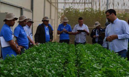 Encontro dos Técnicos reúne equipe para treinamentos de campo e de gestão em horticultura