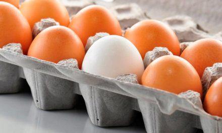 Produção de ovos em São Paulo cresce 15,8% em dez anos, mas participação nacional diminui