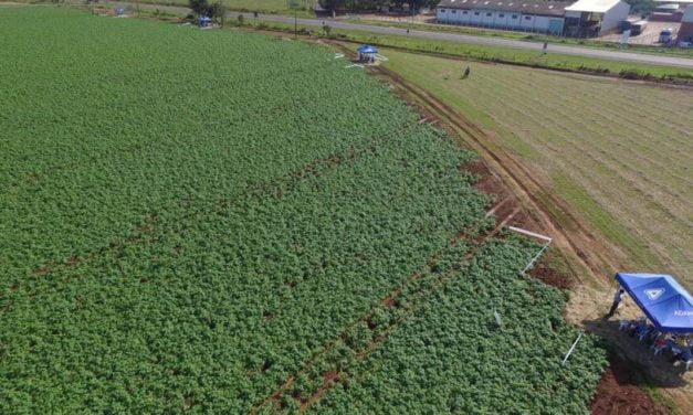 Soluções para hortifrútis são destaque no Campo de Treinamento da Adama em Mococa (SP)