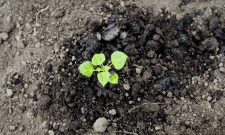 Cinco dicas para fortalecer a saúde das plantas e gerar bons frutos