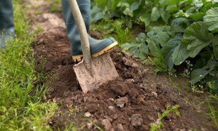 SRB aponta excessos do Ministério Público contra pequenos produtores rurais