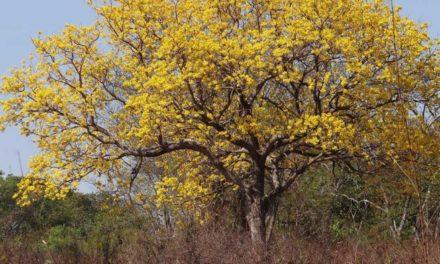 Produtores rurais de Mato Grosso receberão apoio para conservar o Cerrado