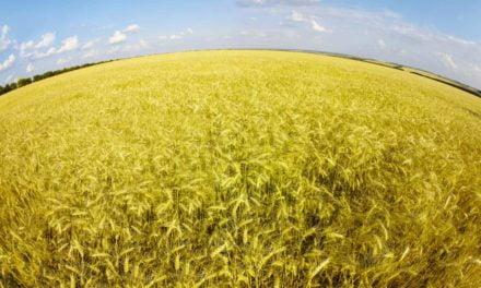 Camp de Ecoinovação Agrotech vai escolher melhores soluções para a cadeia de grãos