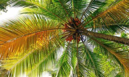 Extrativismo sustentável estimula o equilíbrio natural do planeta