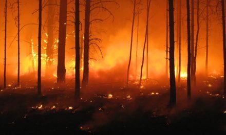 Secretaria do meio ambiente estabelece regras de responsabilidade ambiental por incêndios