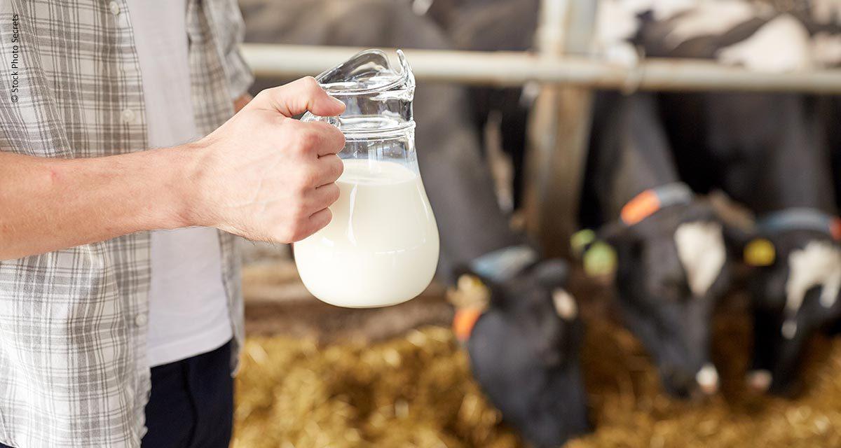 Governo de SP amplia prazo e itens de financiamento para atender necessidades do produtor de leite