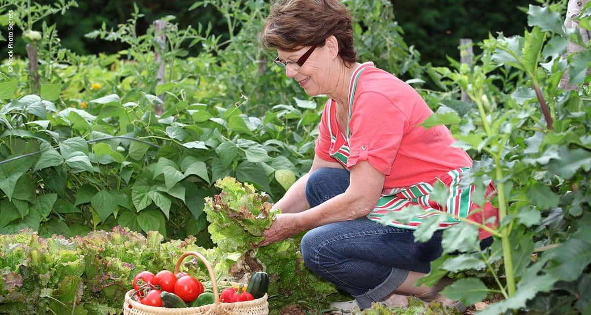 O crescimento da Agricultura Orgânica e a busca por uma alimentação saudável