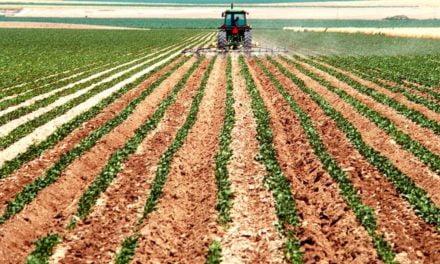 Maior rendimento e produtividade no campo com o uso de algas marinhas