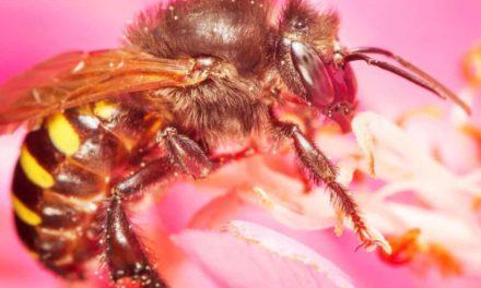 Dia Nacional da abelha – 3 de outubro