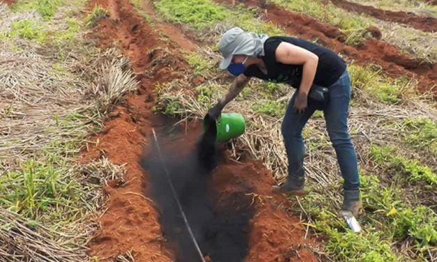 Biocarvão feito com resíduos é testado como condicionador de solo