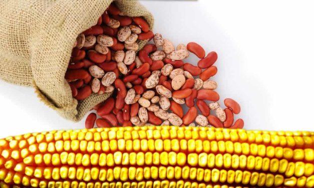Projeto Centro-Sul de Feijão e Milho avança para mais um ciclo