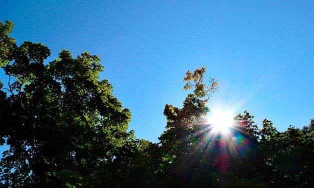 Feira debate aplicações tecnológicas na gestão de florestal