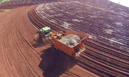 Usina Guaíra adota práticas agrícolas que garantem bons resultados no plantio