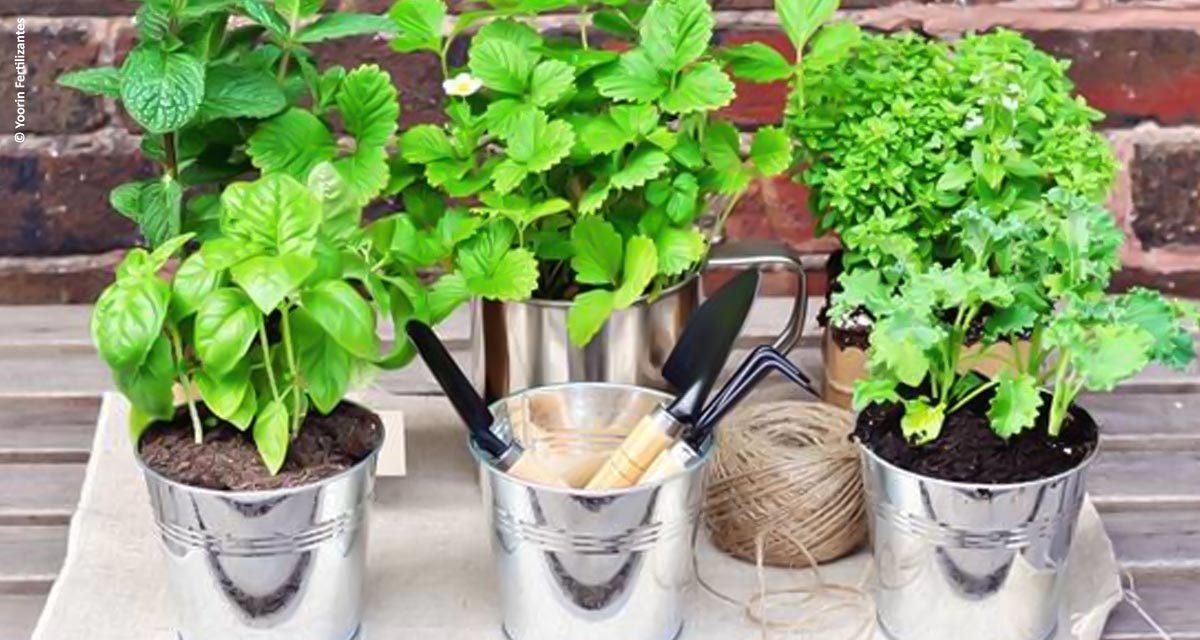 O fertilizante ideal para cada plantação