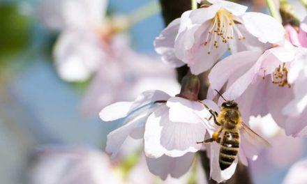 A.B.E.L.H.A. integra ação de fomento à pesquisa sobre insetos polinizadores