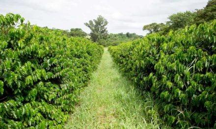 O café pode ser sustentável e manter a rentabilidade