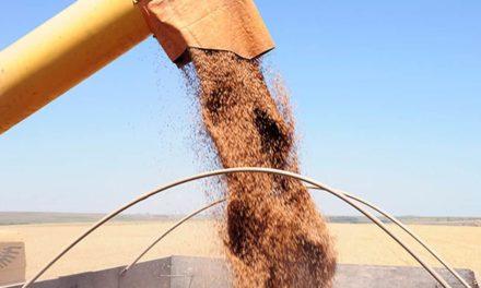 Fazenda no Cerrado registra recorde brasileiro na produtividade de trigo