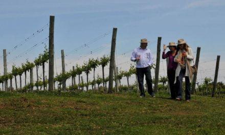 Brasil se prepara para integrar Dia Mundial do Enoturismo