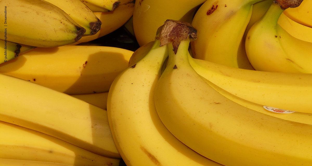 Manejo equilibrado de cálcio eleva produtividade da banana